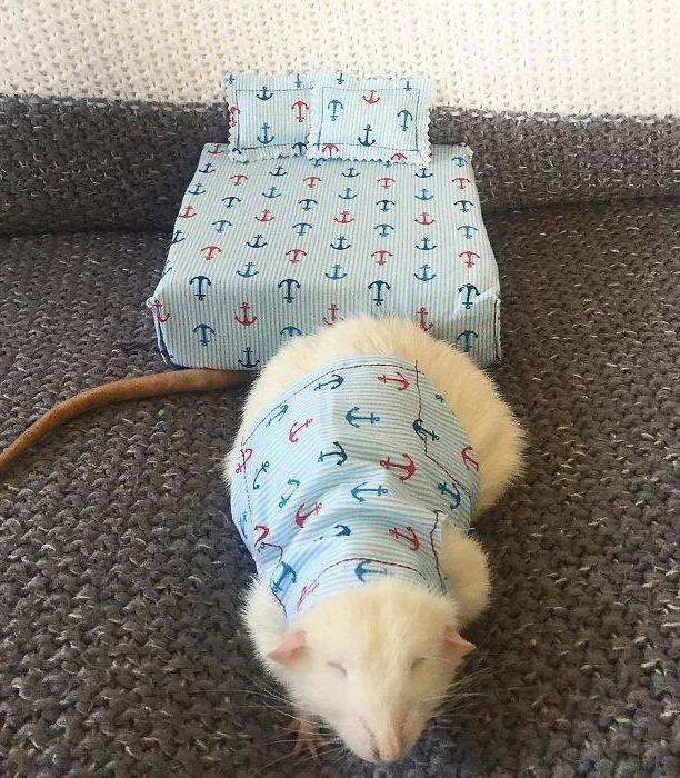 Эта женщина шьет пижамы и матрасы для грызунов в одном стиле! Они очаровательны!
