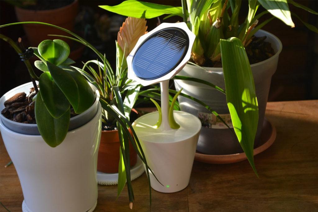 Это солнечное зарядное устройство для телефона в форме подсолнуха изготовлено из кукурузного початка