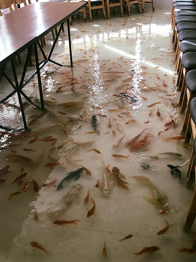 Пожалуйста, не наступайте на рыбу! Уникальное кафе во Вьетнаме