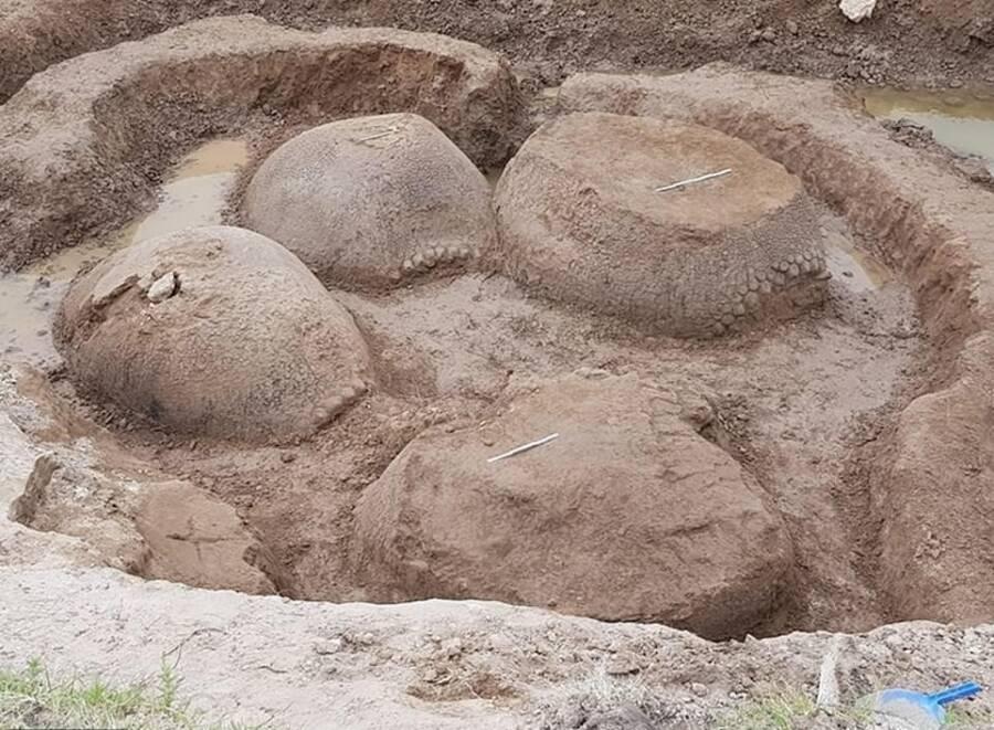 Аргентинский фермер в своем дворе нашел семью броненосцев размером с автомобиль