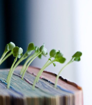 Отличная идея! Японский художник использует старые книги, как горшки для своих растений!
