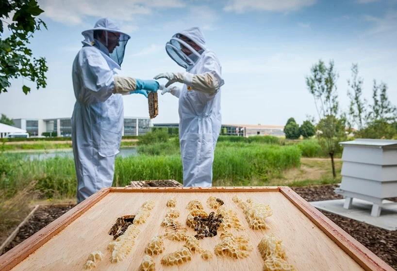 Меду – да, автомобилям – нет! Rolls-Royce обзавелся пчелами и теперь производит мед!